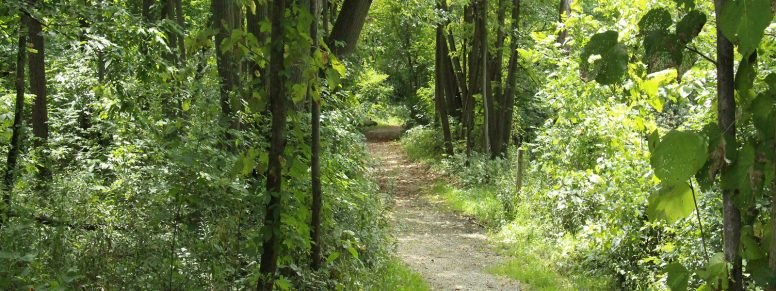 walking trail at Cedar Creeks Preserve