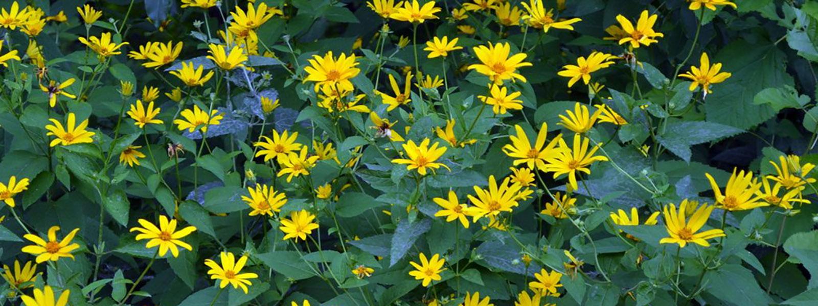 Fuller Preserve native plants
