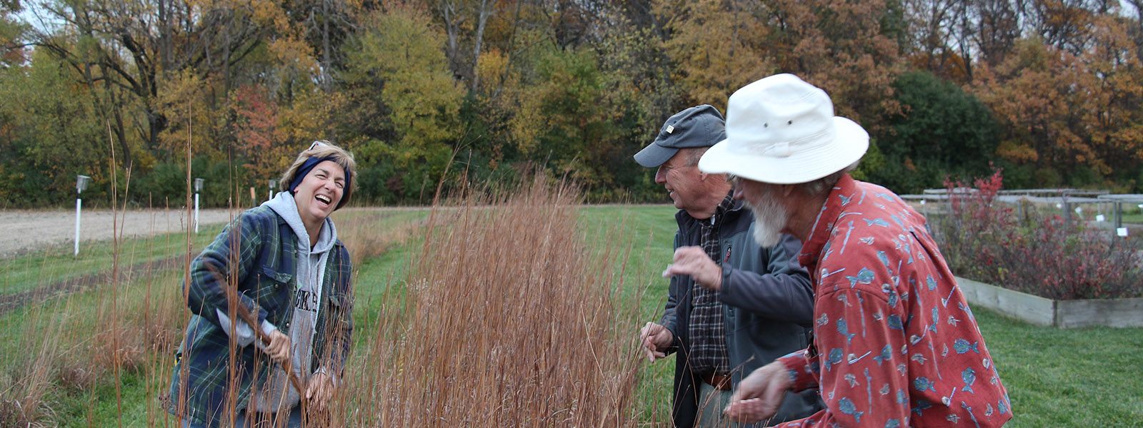 Volunteering by collecting seeds for the native plant program Wood County Park District