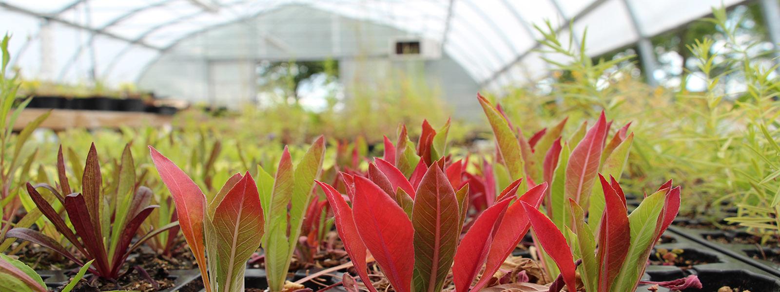 Reuthinger Native Plant Greenhouse